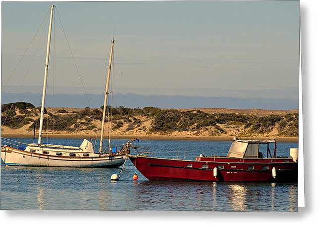Boats In Harbor Greeting Cards - Before Sundown Greeting Card by Fraida Gutovich