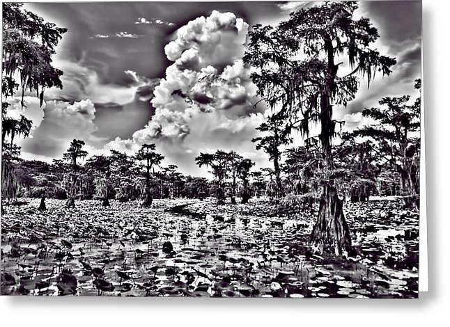 Water Lilly Greeting Cards - Before the Storm Black and White Greeting Card by Douglas Barnard