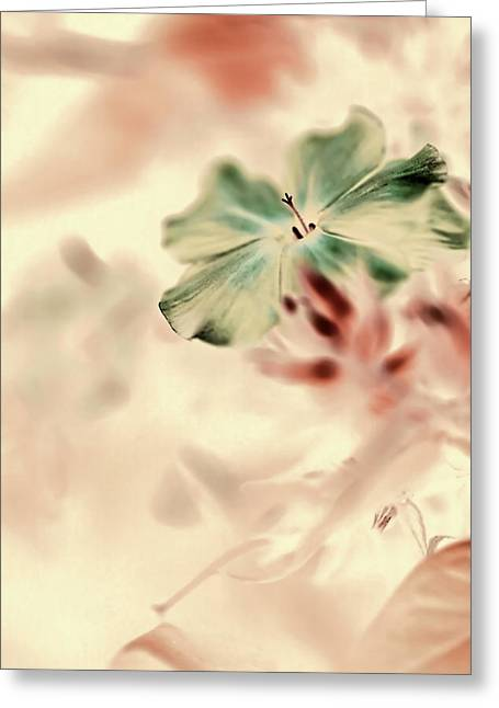 Soft Light Greeting Cards - Beginnings Greeting Card by Bonnie Bruno