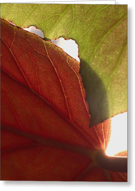Art Ferrier Greeting Cards - Begonia 1 Greeting Card by Art Ferrier