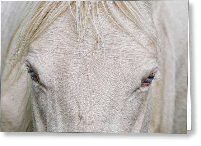Behind Blue Eyes Greeting Card by Heather  Rivet