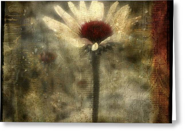 Surreal Digital Image Greeting Cards - Behind The Lace Curtain Greeting Card by Gothicolors Donna Snyder