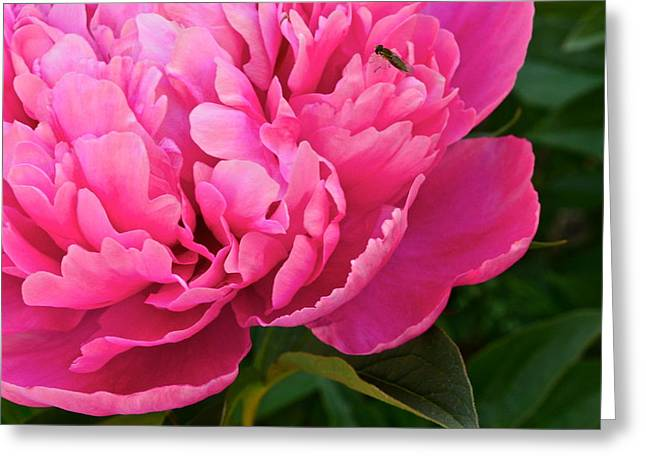 Masterful Greeting Cards - Behold the Beauty Greeting Card by Frozen in Time Fine Art Photography