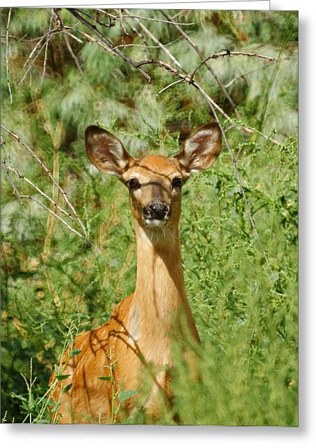 Fountain Creek Nature Center Greeting Cards - Being Watched Greeting Card by Ernie Echols
