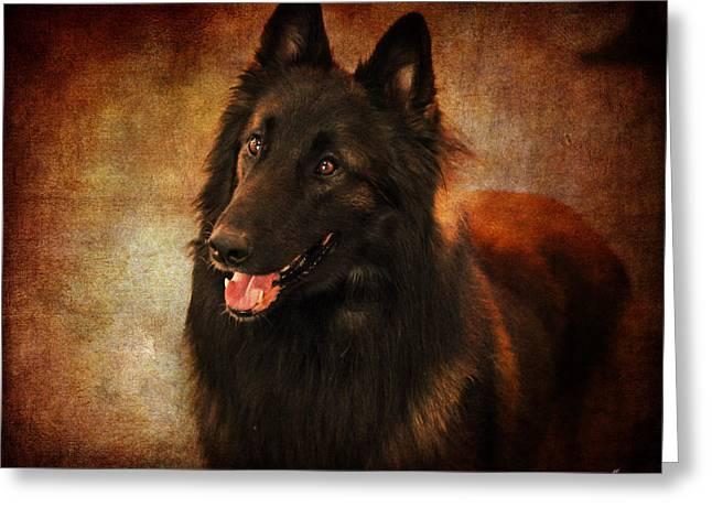 Show Dog Greeting Cards - Belgian Tervuren Shepherd Greeting Card by Jai Johnson