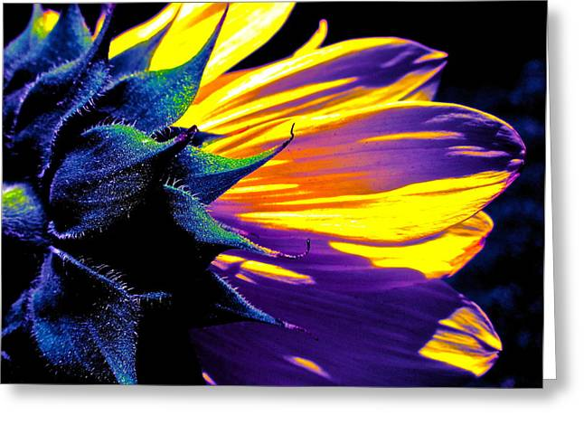 Floral Photographs Greeting Cards - Believe in Him Greeting Card by Gwyn Newcombe