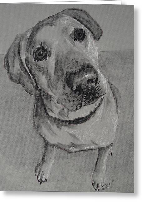 Custom Pet Drawing Greeting Cards - Bella Bean Labrador Retriever Greeting Card by Ruthie Sutter
