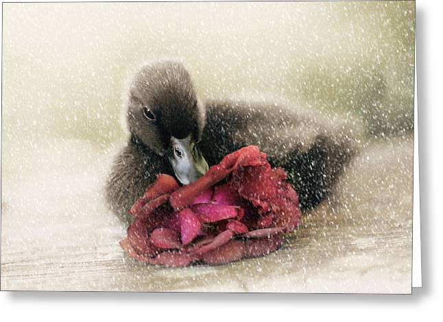 Red Photographs Greeting Cards - Bella in the Snow Greeting Card by Amy Tyler