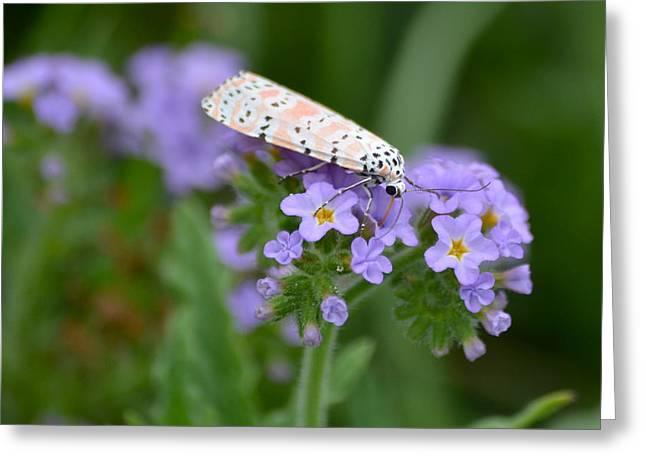 Rattlebox Greeting Cards - Bella Moth Greeting Card by Kathy Gibbons