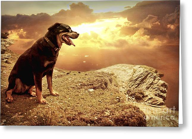 Rottweiler Greeting Cards - Bella my Rottweiler Greeting Card by Eugene James
