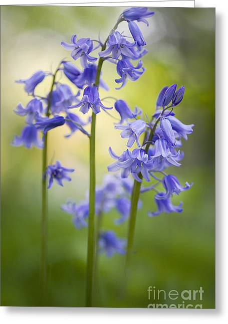Close Focus Floral Greeting Cards - Bells of Blue Greeting Card by Jacky Parker