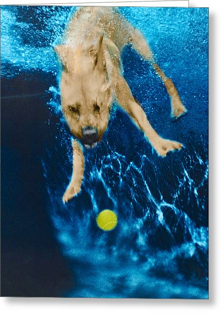 Diving Dog Greeting Cards - Belly Flop Greeting Card by Jill Reger