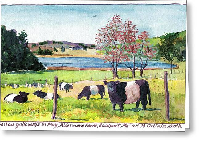 Maine Farms Paintings Greeting Cards - Belted Galloway Art  Maine Cows in May Greeting Card by Catinka Knoth