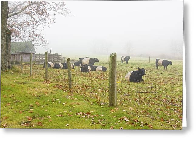 Graze Greeting Cards - Belted Galloway Cows Farm Rockport Maine Photograph Greeting Card by Keith Webber Jr