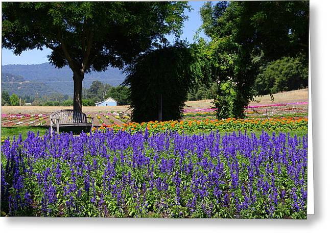 Next To Tree Greeting Cards - Bench in Flowers Greeting Card by Jeff Lowe