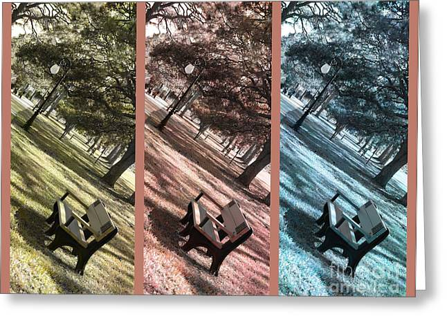 Bench in the Park Triptych  Greeting Card by Susanne Van Hulst