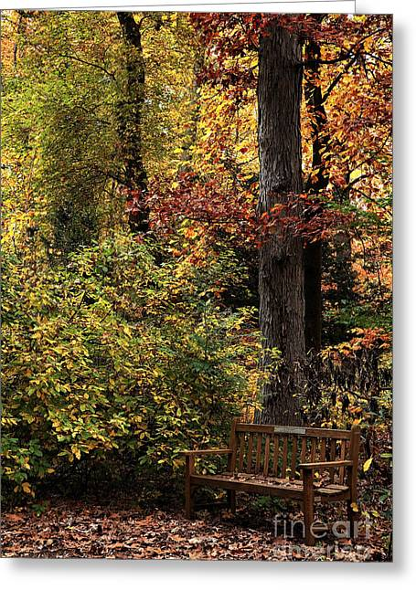 Wood Bench Greeting Cards - Bench in the Woods Greeting Card by John Rizzuto