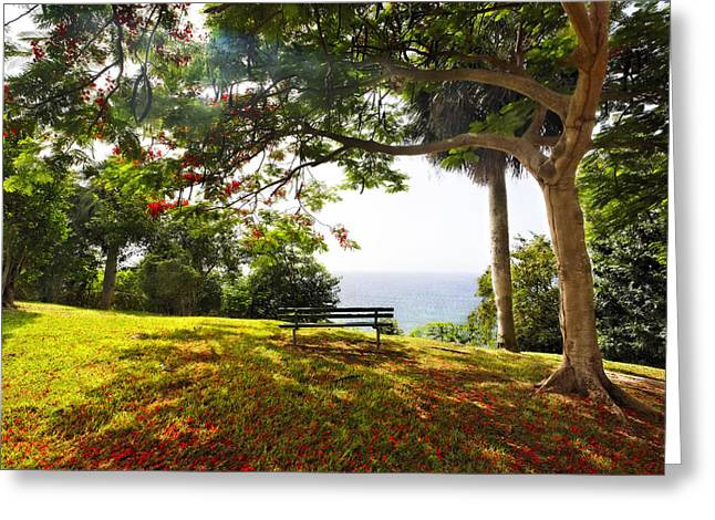 Regia Greeting Cards - Bench Under a Flamboyan Tree Greeting Card by George Oze