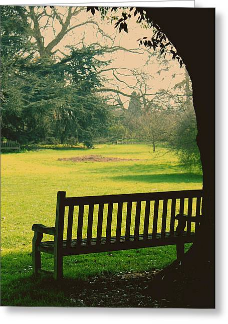 Empty Bench Greeting Cards - Bench under a tree Greeting Card by Jasna Buncic