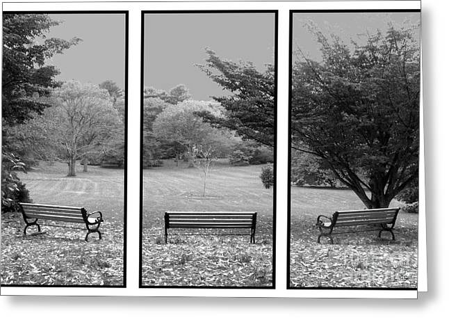 Tom Romeo Greeting Cards - Bench View Triptic Greeting Card by Tom Romeo