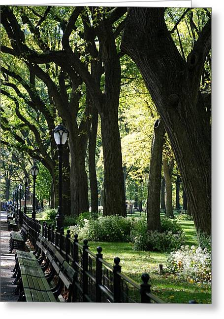 Natral Greeting Cards - BENCHES TREES and LAMPS Greeting Card by Rob Hans