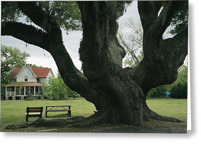 Benches And Chairs Greeting Cards - Benches Under A Live Oak Tree Greeting Card by Raymond Gehman