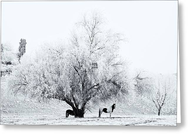 Beneath A Frosty Canopy Greeting Card by Mike  Dawson