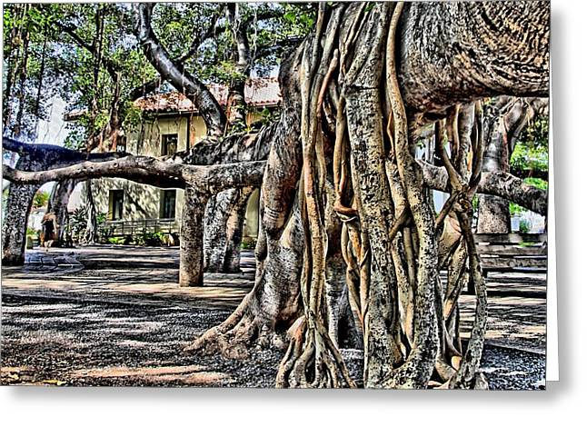 Djphoto Greeting Cards - Beneath the Banyan Tree Greeting Card by DJ Florek