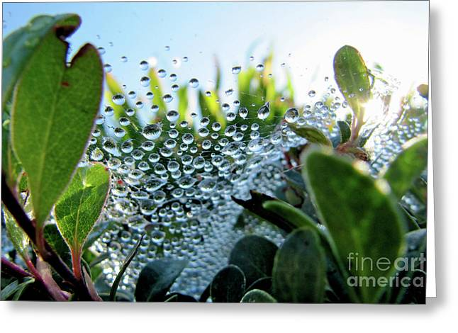 Beneath The Web Greeting Card by CML Brown