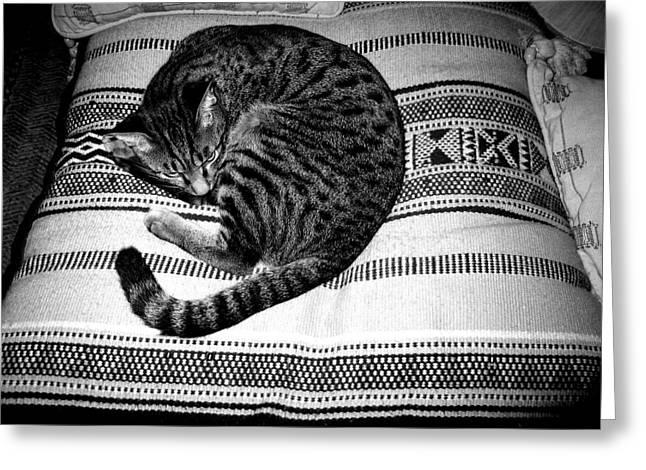Black And White Photos Pyrography Greeting Cards - Bengal Catnap Greeting Card by Fareeha Khawaja