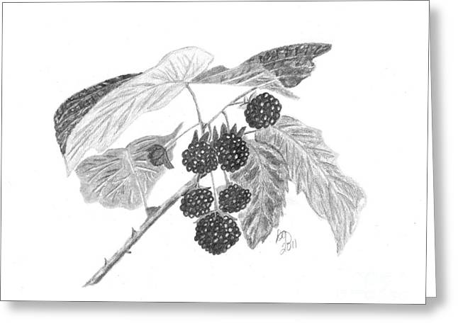 Raspberry Drawings Greeting Cards - Berries Greeting Card by DebiJeen Pencils