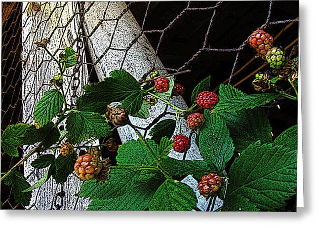 Berries Greeting Card by Jessica Brawley