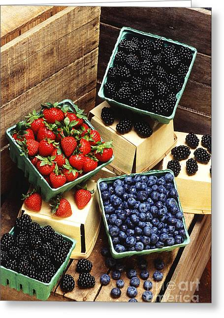 Black Berries Greeting Cards - Berries Greeting Card by Photo Researchers
