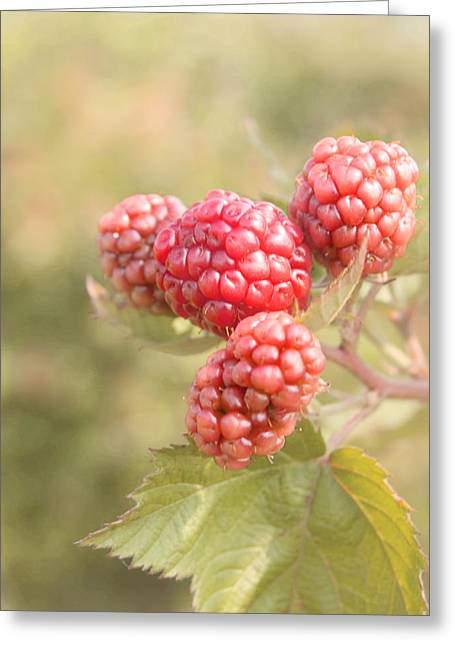 Berry Good Greeting Card by Kim Hojnacki