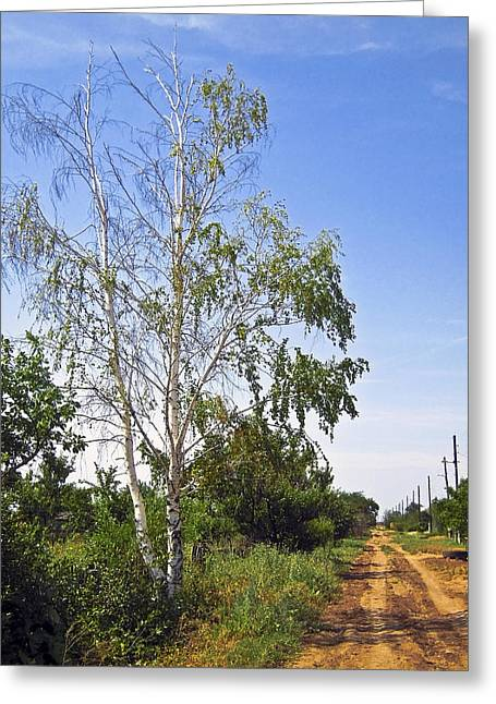 Birch Tree Greeting Cards - Beside the village road Greeting Card by Svetlana Sewell