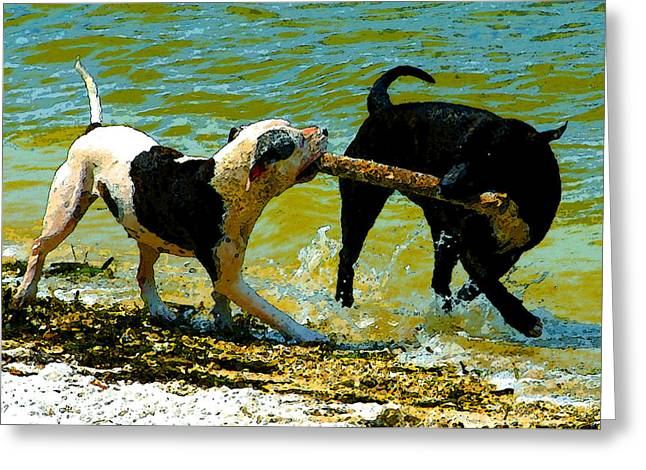 Dog Play Beach Greeting Cards - Best Friends Greeting Card by David Lee Thompson