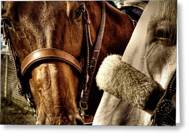 Equus Ferus Greeting Cards - Best of Friends Greeting Card by David Patterson
