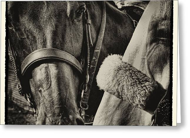 Equus Ferus Greeting Cards - Best of Friends II Greeting Card by David Patterson