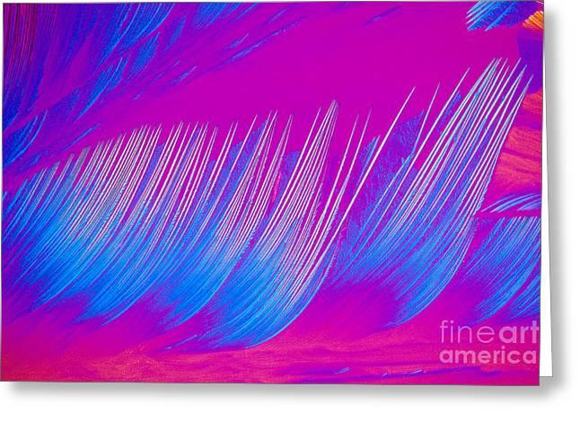 Carotene Greeting Cards - Beta-carotene Crystal Greeting Card by Michael W. Davidson
