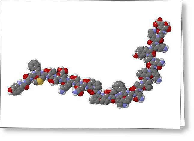 Beta Greeting Cards - Beta-endorphin Molecule Greeting Card by Laguna Design