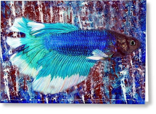 Betta Greeting Cards - Betta in Blue and Red Greeting Card by Neal Wiseman