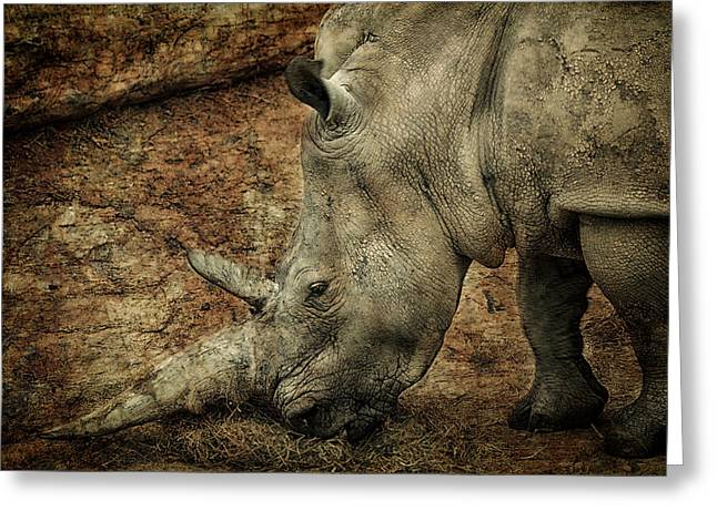 One Horned Rhino Greeting Cards - Between a Rock and a Hard Place Greeting Card by Paul and Fe Photography Messenger