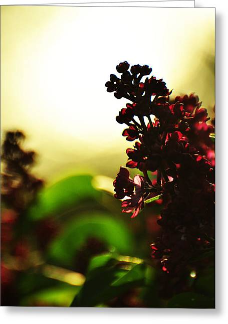 Floriography Greeting Cards - Between Me and the Sun Greeting Card by Rebecca Sherman