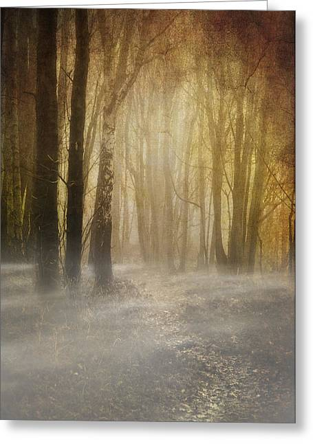 Beware Misty Woodland Path Greeting Card by Meirion Matthias