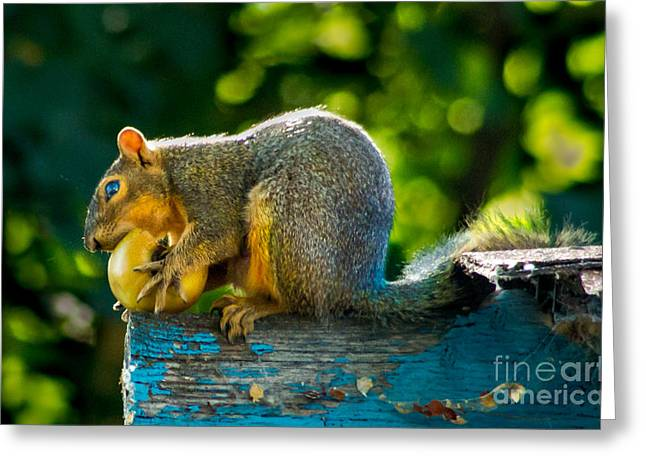 Eastern Fox Squirrel Greeting Cards - Big Apple  Greeting Card by Robert Bales