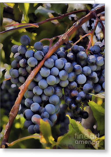 Ready For Harvest Greeting Cards - Big Bunch Of Grapes Greeting Card by Michael Flood