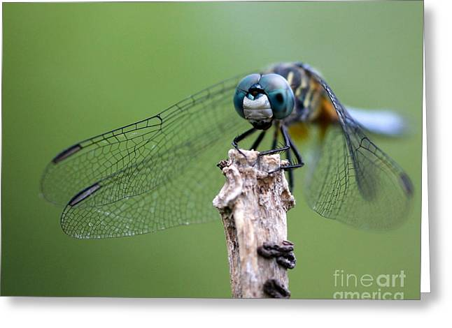 Huge Eyes Greeting Cards - Big Eyes Blue Dragonfly Greeting Card by Sabrina L Ryan