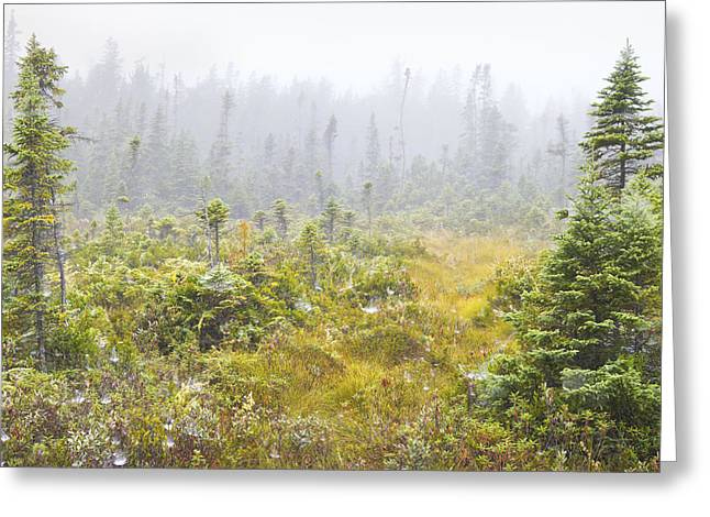 Heathland Greeting Cards - Big Heath Acadia National Park Photograph Greeting Card by Keith Webber Jr