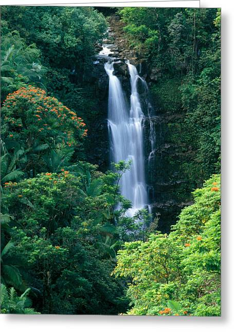 Hamakua Greeting Cards - Big Island Waterfall Greeting Card by Brent Black - Printscapes