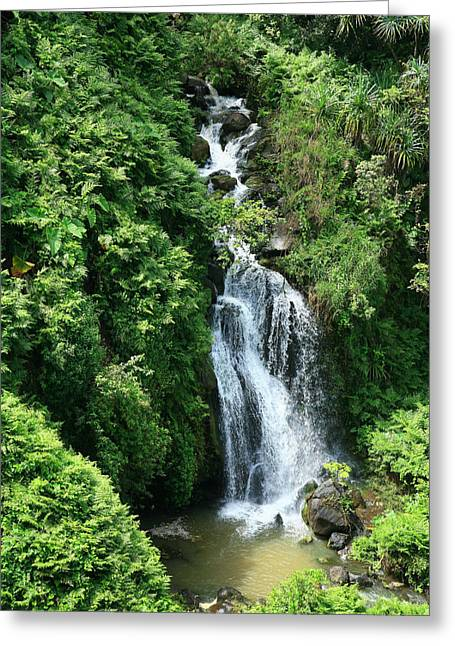 Hamakua Greeting Cards - Big Island Waterfall Greeting Card by Peter French - Printscapes